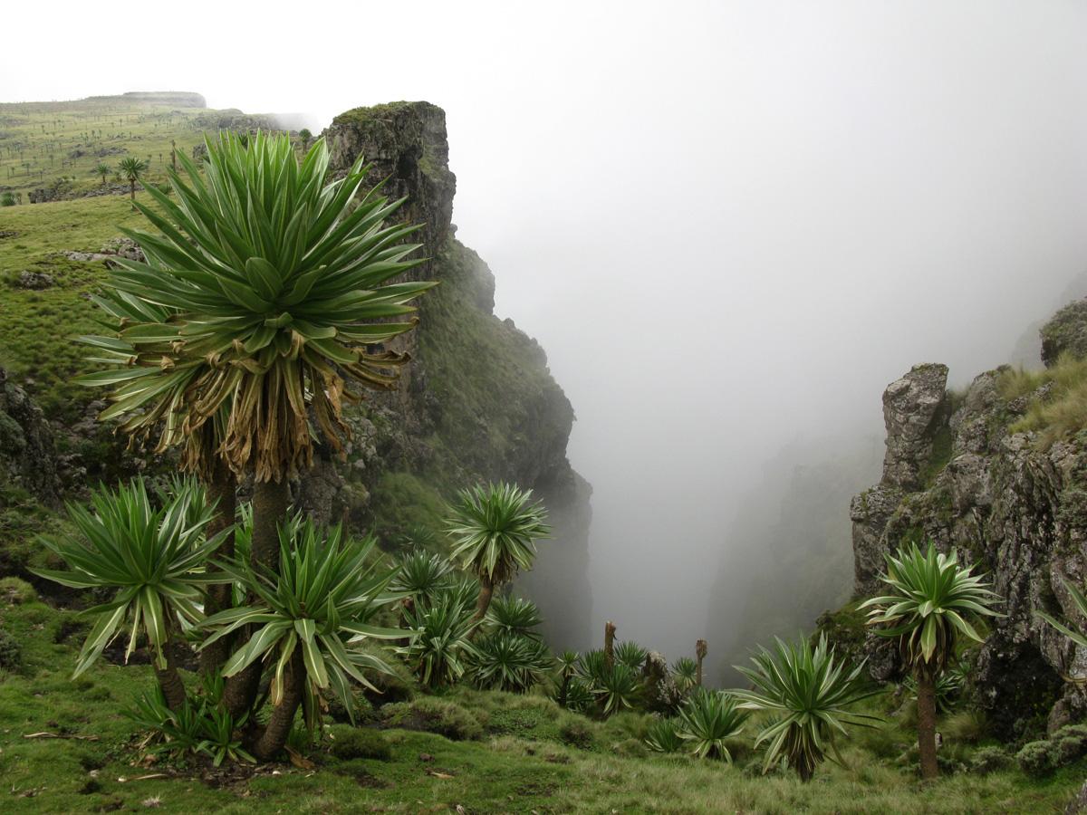 Ethiopie_ph_15_Simiens_393